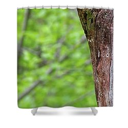 Redstart Shower Curtain
