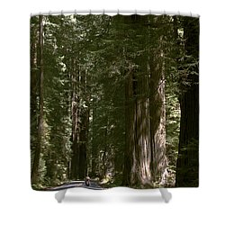 Redwood Highway Shower Curtain