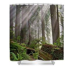 Redwood Light Shower Curtain