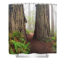 Redwood Trail Shower Curtain