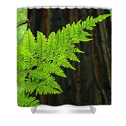 Redwood Tree Forest Ferns Art Prints Giclee Baslee Troutman Shower Curtain by Baslee Troutman