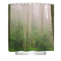 Redwoods Fog Shower Curtain