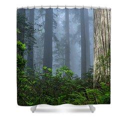 Redwoods In Blue Fog Shower Curtain
