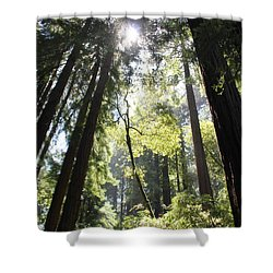 @redwoods Shower Curtain