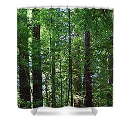 Redwoods No. 3-1 Shower Curtain