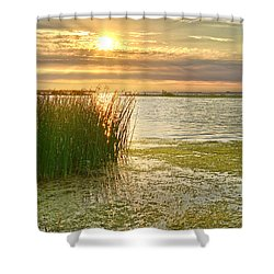 Reeds In The Sunset Shower Curtain