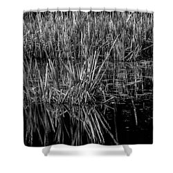 Reeds Reflection  Shower Curtain