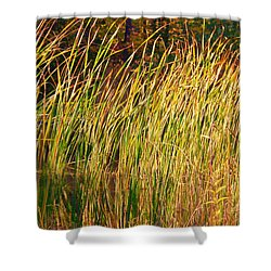 Reeds Shower Curtain by Susan Crossman Buscho