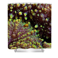 Reef Art - Stony Coral IIi Shower Curtain by Henry Jager