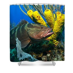 Reef Denizon Shower Curtain