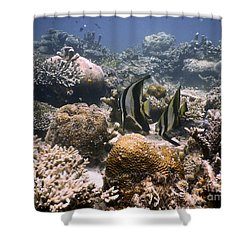 Shower Curtain featuring the photograph Reef by Gary Bridger