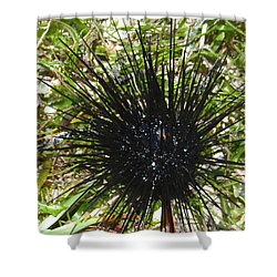 Reef Life - Sea Urchin 1 Shower Curtain