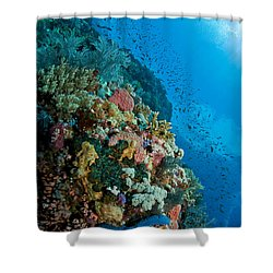 Reef Scene With Corals And Fish Shower Curtain by Mathieu Meur