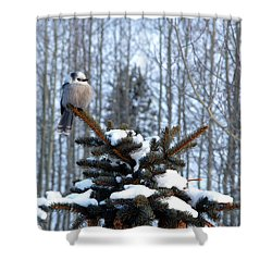 Refined Little Gray Jay In Colorado Shower Curtain