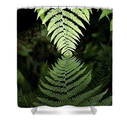 Reflected Ferns Shower Curtain