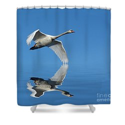 Reflected Swan Shower Curtain