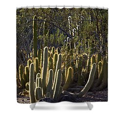 Shower Curtain featuring the photograph Reflecting The Sunshine by Phyllis Denton