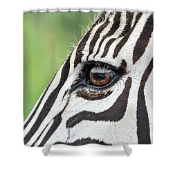 Reflection In A Zebra Eye Shower Curtain