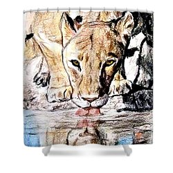 Reflection Of A Lioness Drinking From A Watering Hole Shower Curtain by Jim Fitzpatrick