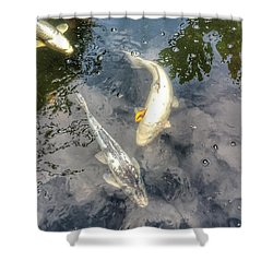 Reflections And Fish 9 Shower Curtain by Isabella F Abbie Shores FRSA