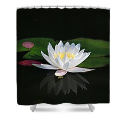 Shower Curtain featuring the photograph Reflections Of A Water Lily by Trina  Ansel