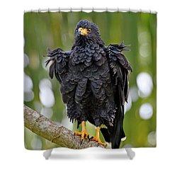 Refresh Shower Curtain