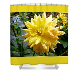 Refreshed Dahlia  Shower Curtain