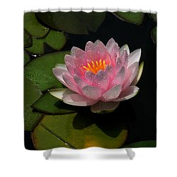 Refreshing Shower Curtain by Doug Norkum