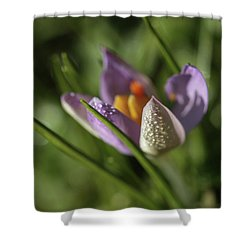 Shower Curtain featuring the photograph Refreshments  by Connie Handscomb