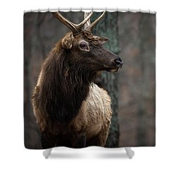 Regal Shower Curtain