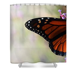Regal Monarch  Shower Curtain