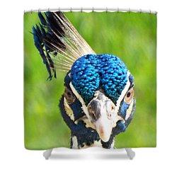Regal Peacock Shower Curtain by Audrey Van Tassell