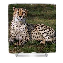Regal Pose Shower Curtain