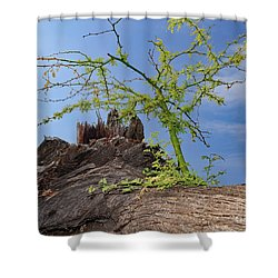 Regrowth Shower Curtain by Mary Haber
