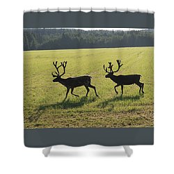 Reindeers On Swedish Fjeld Shower Curtain