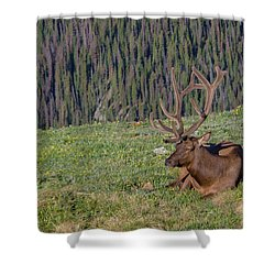 Relaxed Elk Shower Curtain by John Roberts