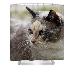 Shower Curtain featuring the photograph Relaxed by Teresa Zieba