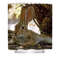 Relaxing Cottontail Shower Curtain