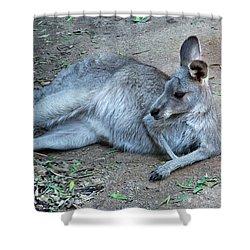 Shower Curtain featuring the photograph Relaxing Kangaroo by Miroslava Jurcik