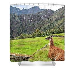 Relaxing Llama In Machu Picchu Shower Curtain