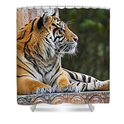 Relaxing Tiger Shower Curtain