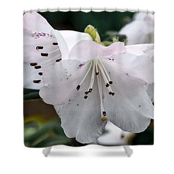 Relinquent Shower Curtain