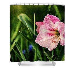Remembering Amaryllis Shower Curtain