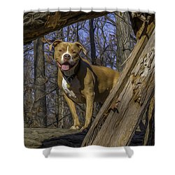 Remy In Tree Oil Paint More Pop Shower Curtain