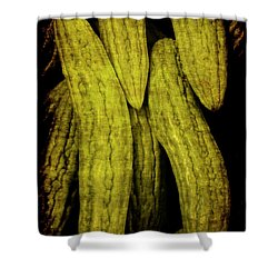 Renaissance Chinese Cucumber Shower Curtain
