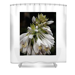 Renaissance Lily Shower Curtain