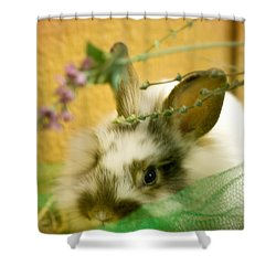 Renewal Shower Curtain by Lois Bryan