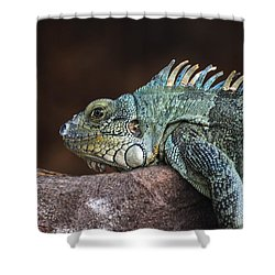 Reptile Shower Curtain by Daniel Precht