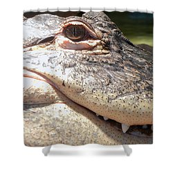 Reptilian Smile Shower Curtain
