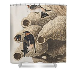 Republican Or Cliff Swallow Shower Curtain by John James Audubon